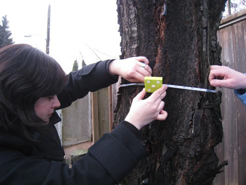 Leanne measures the cherry tree