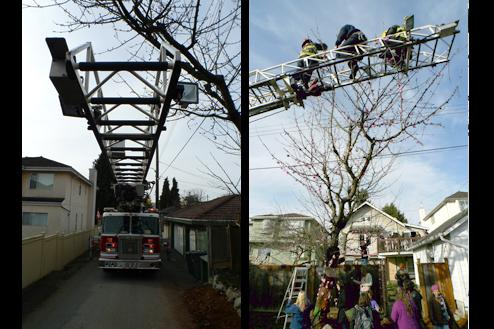 When the day came to actually yarnbomb the tree, firefighters lent use of their ladder to help decorate Joy Kogawa's tree.