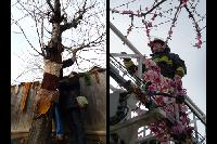 "Prain begins attaching the ""bark"" while the firefighters hang the garlands."