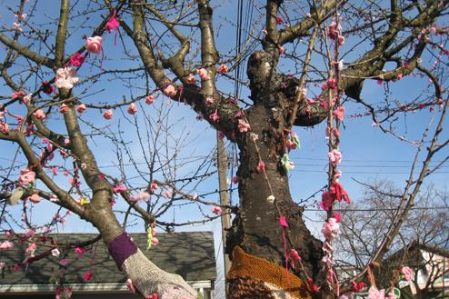Joy Kogawa's cherry tree can be best viewed from the alley behind the house.