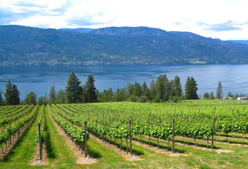 The lakeside orchards of Arrowleaf Winery, Vernon