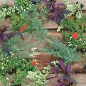 Annuals for hanging basket
