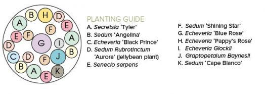 spectacular succulents container planting guide