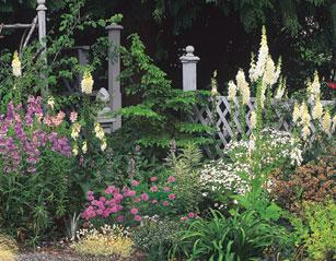 show of blooms, marion espin, garden in victoria