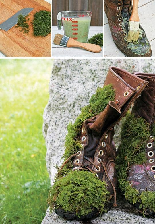Grow moss on leather boots