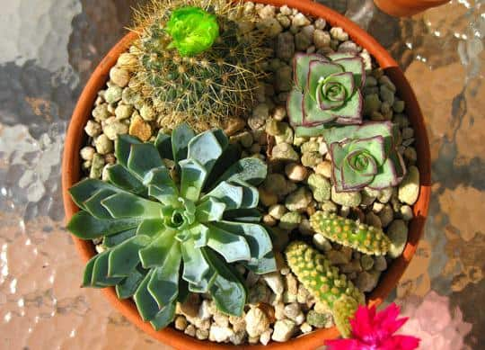 Top Terrarium Plant Picks Bcliving