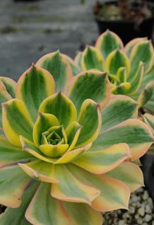 Top Terrarium Plant Picks Bcliving