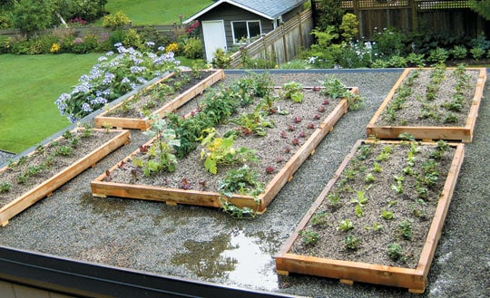 design a green roof - bcliving
