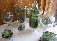types of glass containers for terrariums