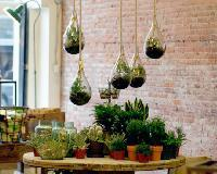 Hanging terrariums at Old Faithful Shop in Vancouver