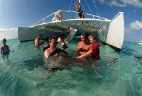 Swim with the Stingrays
