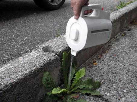 Remove Weeds in the Cracks