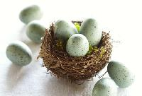 Decorative Robin's Eggs from Pottery Barn