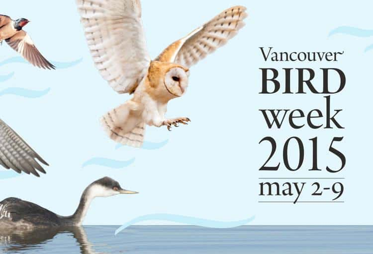 Vancouver Bird Week – May 2 to 9