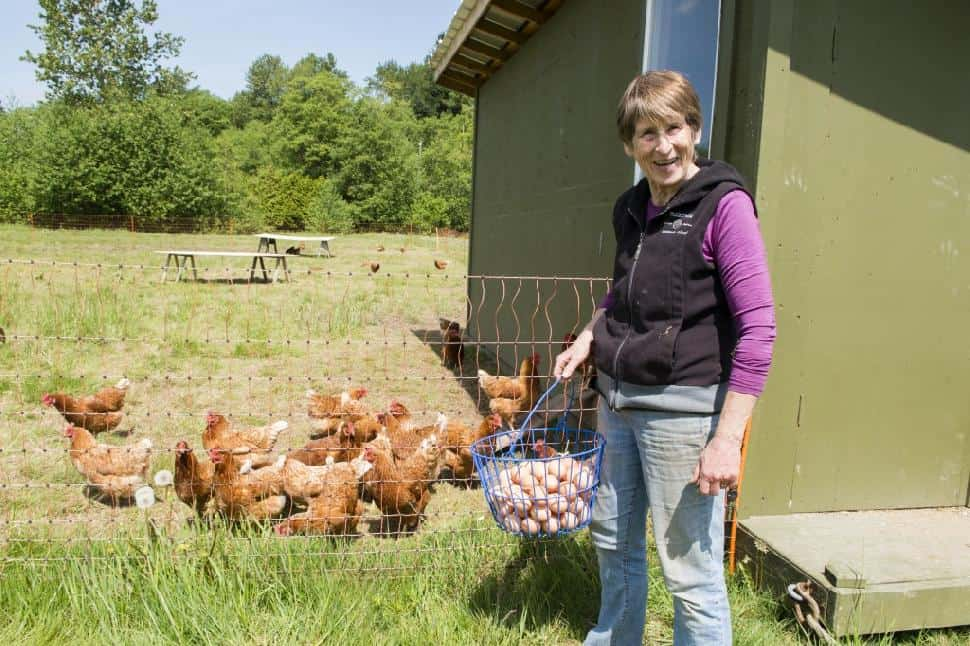 Zaklan Heritage Farm – Fresh Eggs From Happy Hens