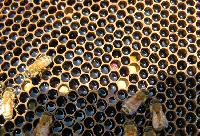Jane's Honey Bees - A Taste of the Fraser Valley