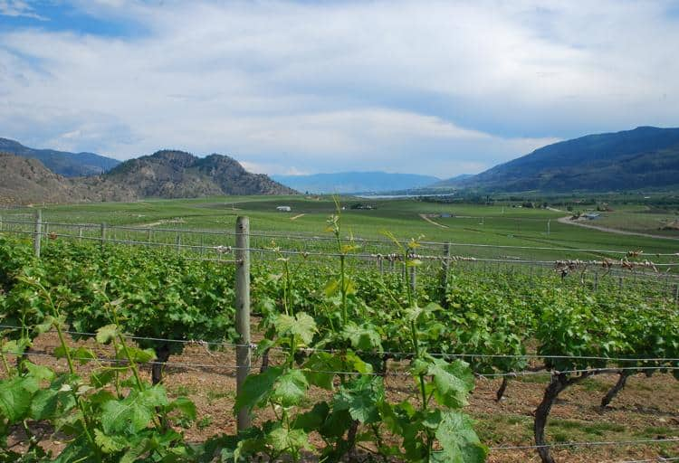 Fantastic new wineries are cropping up in the Okanagan Valley, particularly in Oliver/Osoyoos