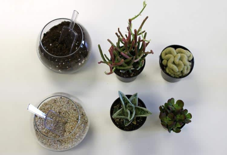 What You'll Need Part 1: Succulents, Pebbles and Soil