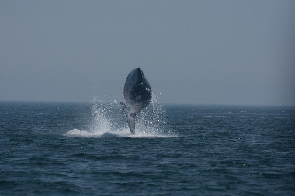 Bay of Fundy Whales