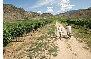 Vineyards-bike-ride.jpg
