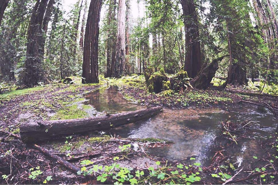 Montgomery Woods State Natural Reserve Mendocino County Ukaih