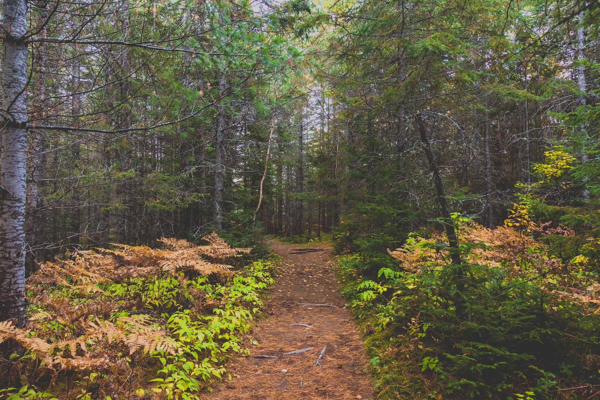 Weekend Inspiration: Beginner-Friendly Overnight Hikes in Ontario