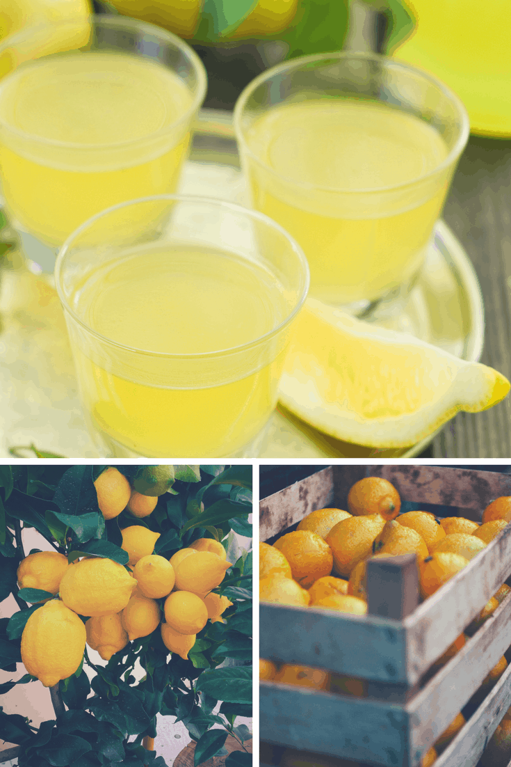Limoncello collage italy drink lemons