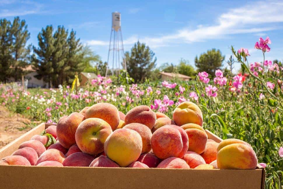 Schepf Farm Fresh Foodie Trail Mesa