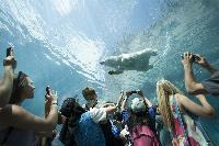 Winnipeg's Assiniboine Park Zoo Journey to Churchill