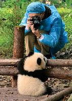 Photographing a cub