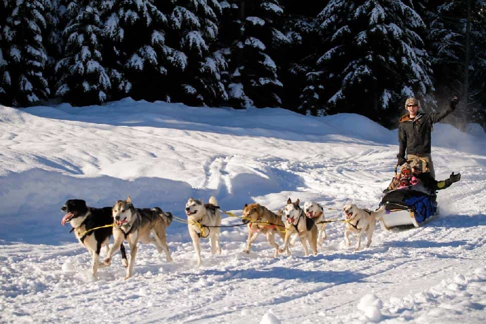 Dogsledding in Golden British Columbia