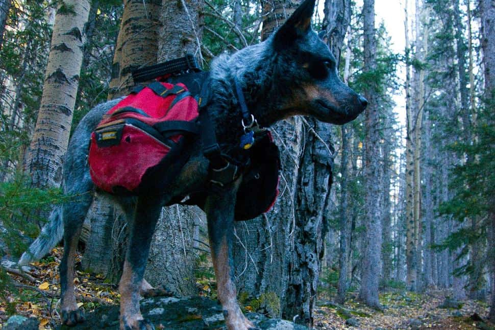 20 Dog-Friendly Hiking Trails Near Vancouver, BC - Explore
