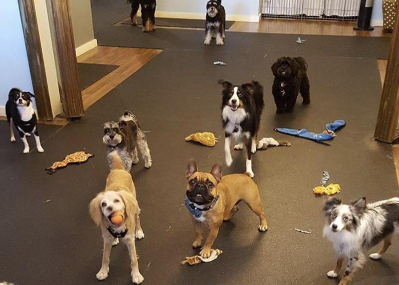 1. Petite Paws Dog Daycare, from $140