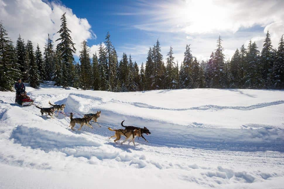 dogsledding in whistler british columbia