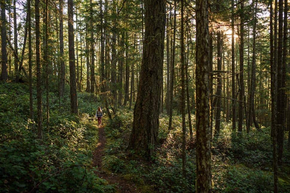 Sunshine Coast Trail - Andrew Strain