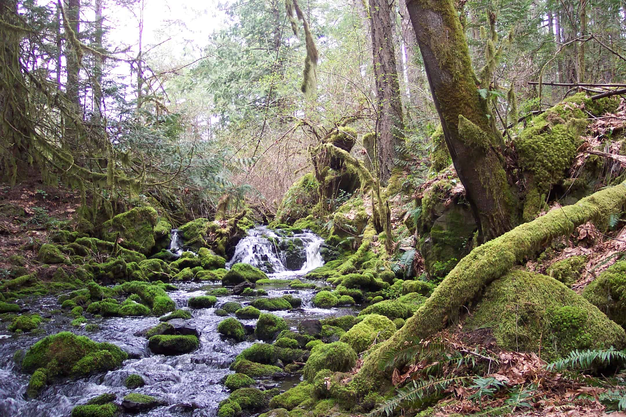 10 of the Best Hikes near Victoria, British Columbia