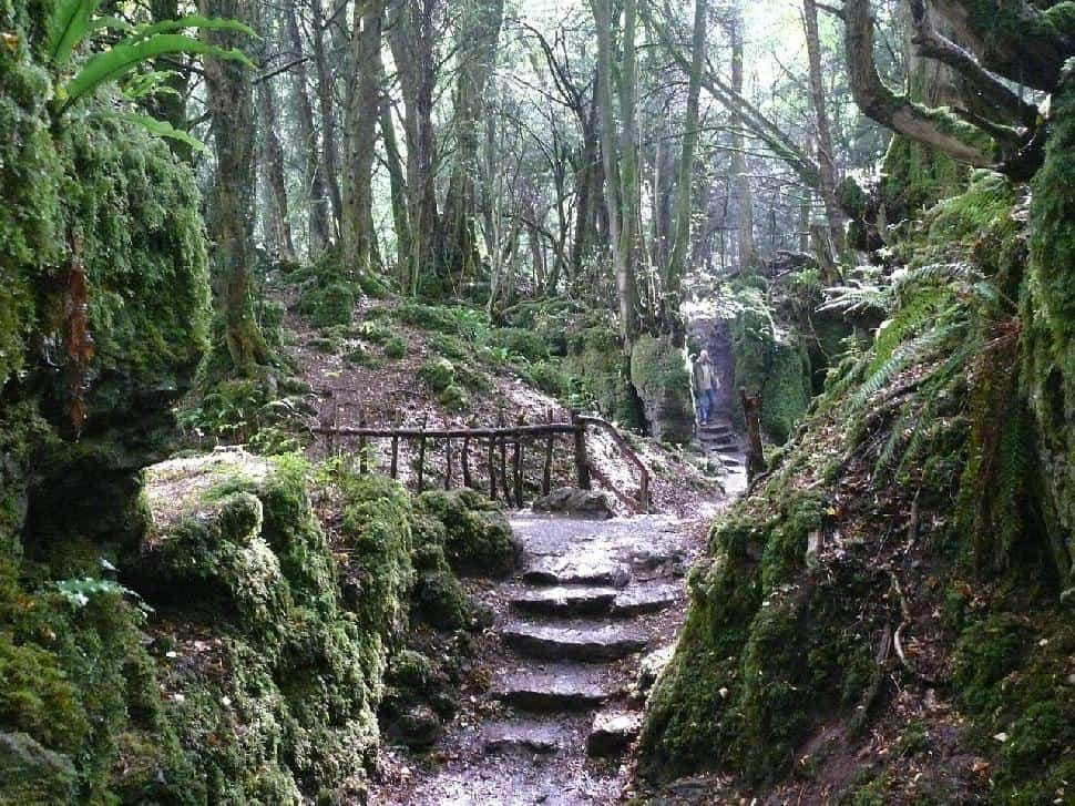 Puzzlewood, England: The magical Star Wars forest