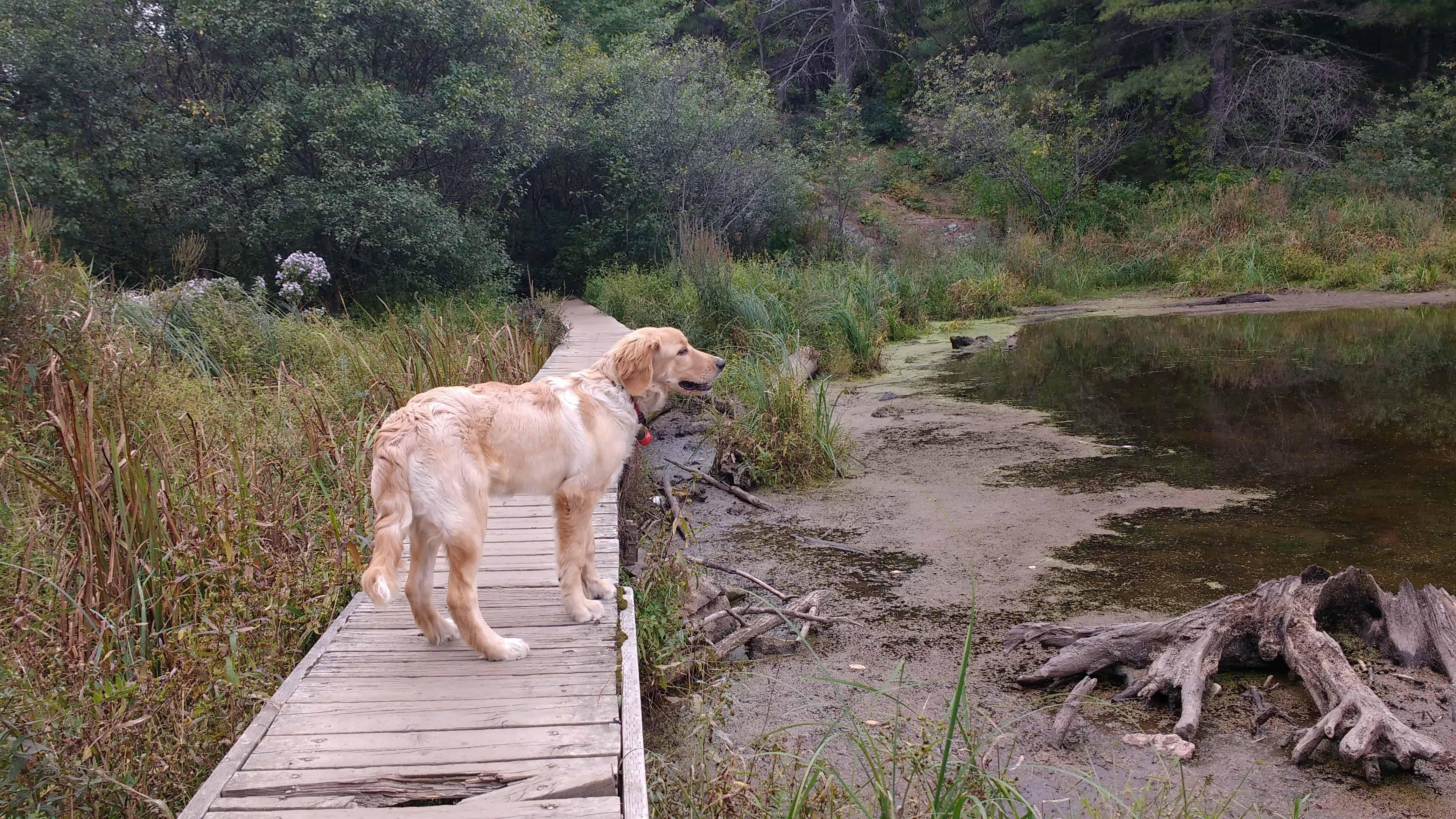 Dog Friendly Camping Near Ottawa