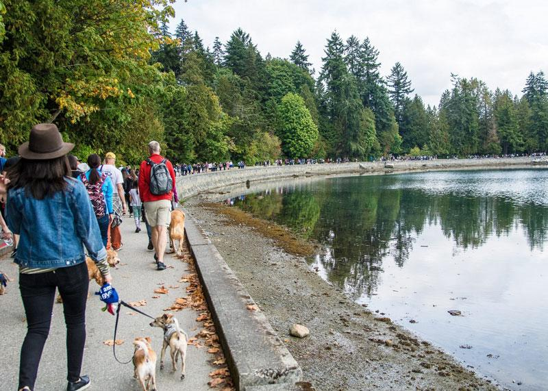 5.The BC SPCA Paws for a Cause — Sunday, September 9