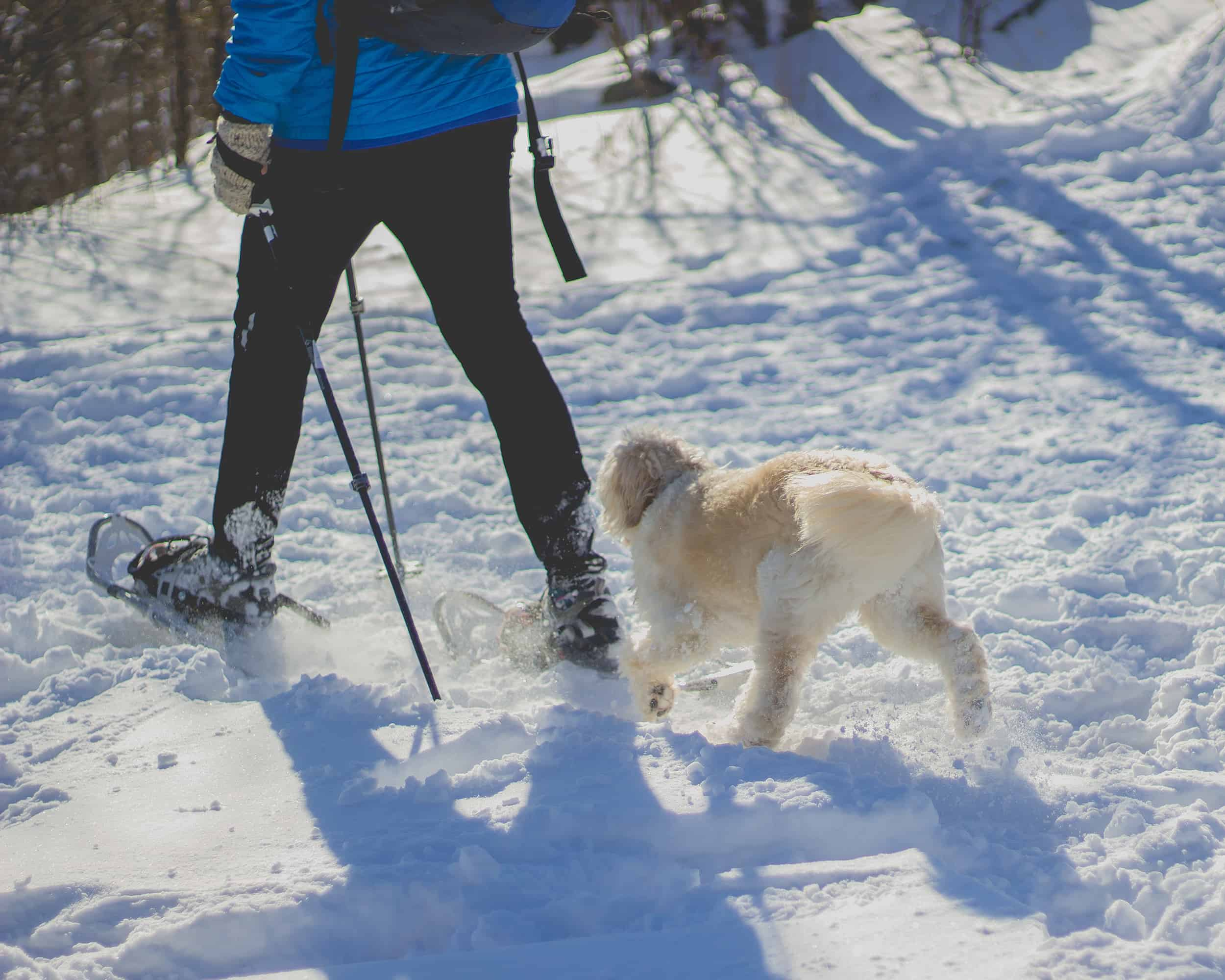10 of the Best Snowshoe Trails in the Rocky Mountains