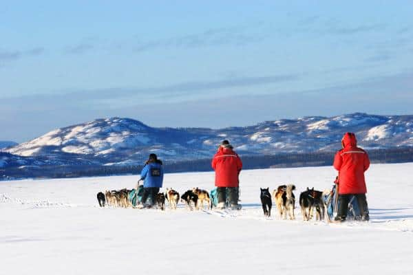Dogsled in the Yukon