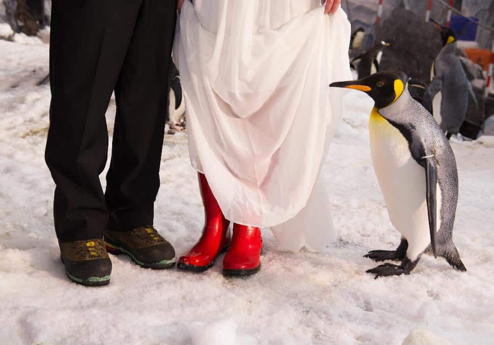 Snow boots were needed to walk down the icy 'aisle' where vows were exchanged.
