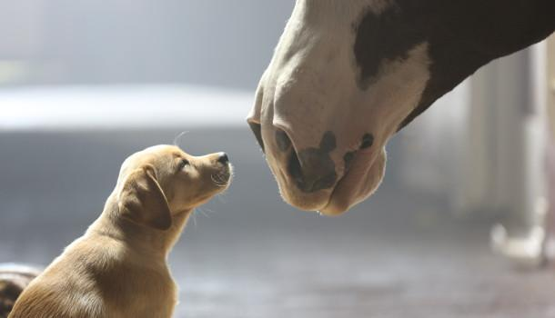 Budweiser Super Bowl XLVIII Commercial