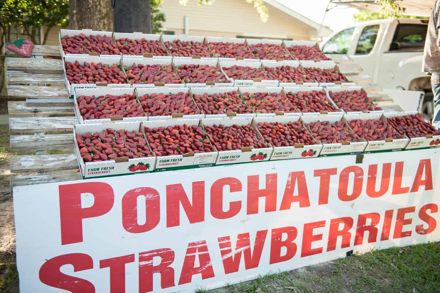 Ponchatoula Strawberry Festival