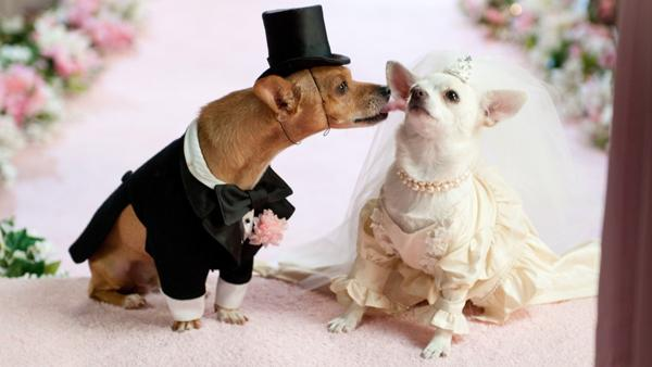 Dog Wedding Kiss