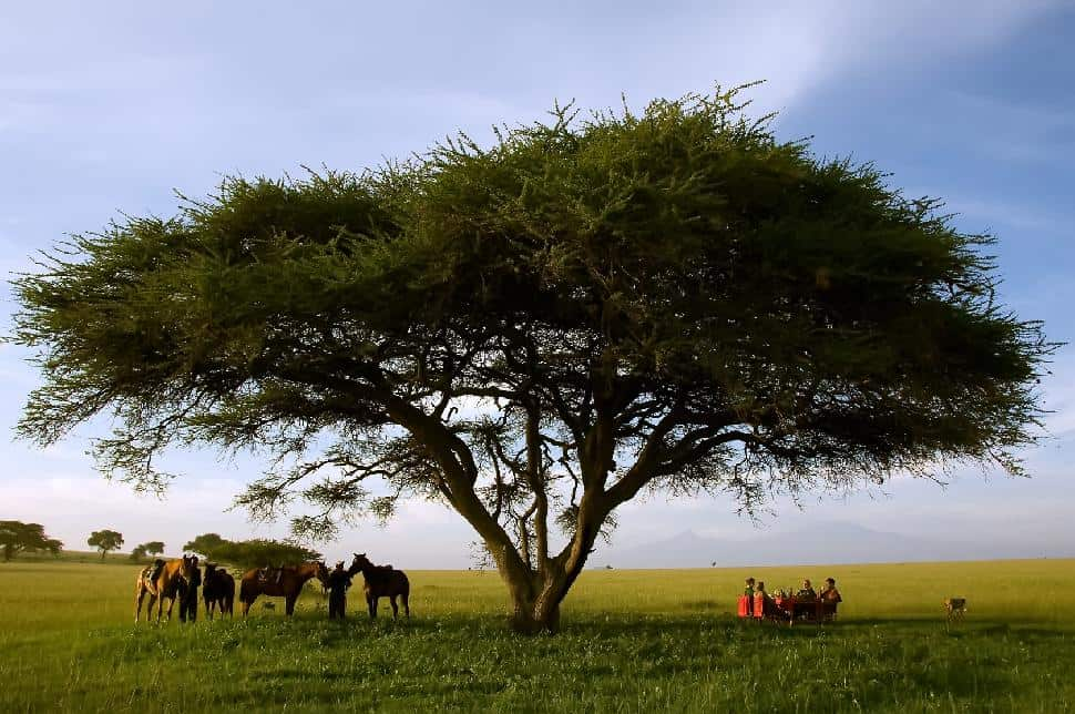 Ride Kenya mobile horse safaris