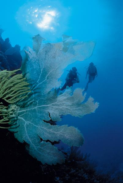 Diving coral reefs.