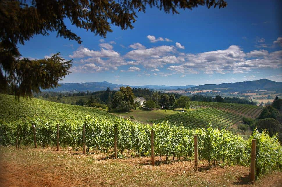 Vineyard & Valley Scenic Tour Route