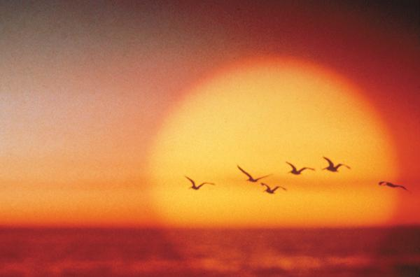 Gulls_at_sunset
