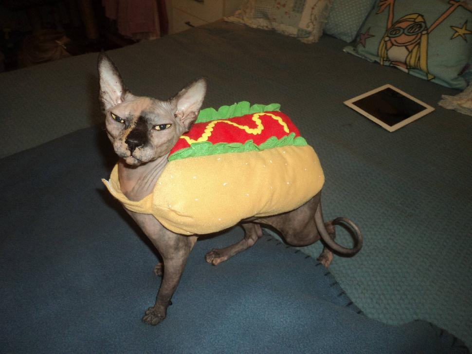 Kitties In Costumes What Was Your Cat For Halloween Paw